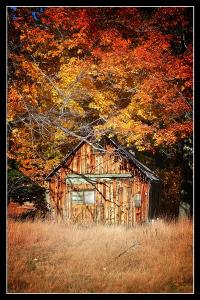 Sugar Shack with trees in backgroun in Autumn colors