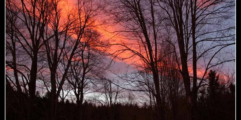 Sky with sunset colors with silhouettes of trees in foreground