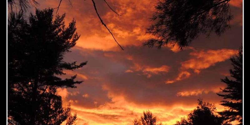 Sky with sunset colors bounded by silhouettes of trees